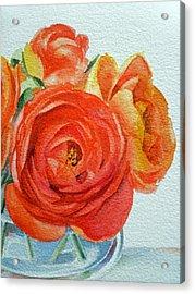 Ranunculus Acrylic Print by Irina Sztukowski