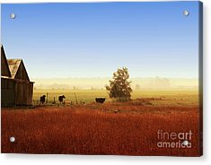 Rawdon Everyday Life Acrylic Print by Aimelle