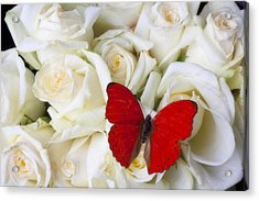 Red Butterfly On White Roses Acrylic Print by Garry Gay