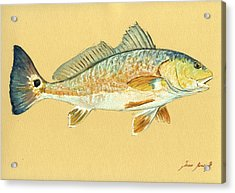 Redfish Painting Acrylic Print by Juan  Bosco