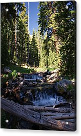 Rocky Mountain Summer Acrylic Print by Michael J Bauer