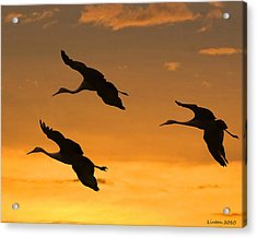 Sandhill Cranes At Dusk Acrylic Print by Larry Linton