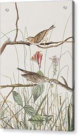 Savannah Finch Acrylic Print by John James Audubon