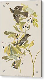 Small Green Crested Flycatcher Acrylic Print by John James Audubon