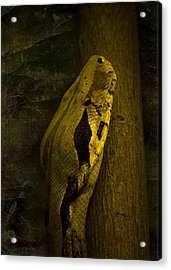 Snake Acrylic Print by Svetlana Sewell
