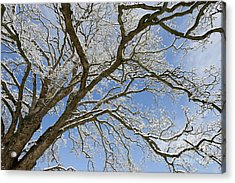 Winter Branch Acrylic Print by Tim Gainey