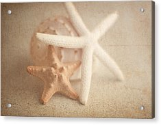Starfish Still Life Acrylic Print by Tom Mc Nemar