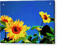 Sunflowers Abstract Acrylic Print by Les Cunliffe