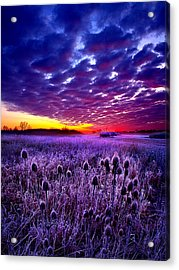 The Audience Acrylic Print by Phil Koch