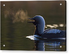 The Call Of The Loon Acrylic Print by Tim Grams