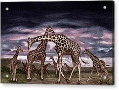 The Herd Acrylic Print by Peter Piatt