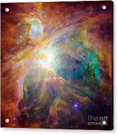 The Orion Nebula Acrylic Print by Stocktrek Images