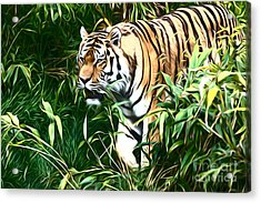 Tiger Acrylic Print by Andrew Michael