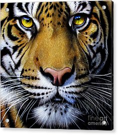 Tiger  Acrylic Print by Jurek Zamoyski