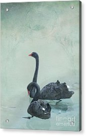 Black Swans Acrylic Print by Cindy Garber Iverson