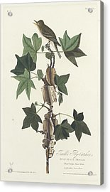 Traill's Flycatcher Acrylic Print by John James Audubon