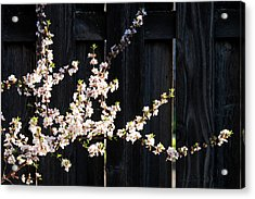 Trees - Blooming Flowers Acrylic Print by Donald Erickson