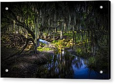 Twisted Oak Acrylic Print by Marvin Spates