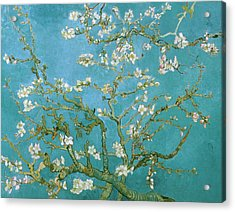 Van Gogh Blossoming Almond Tree Acrylic Print by Vincent van Gogh