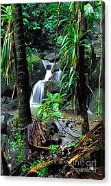 Waterfall El Yunque National Forest Acrylic Print by Thomas R Fletcher
