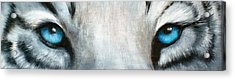 Whos Watching Who...white Tiger Acrylic Print by Darlene Green