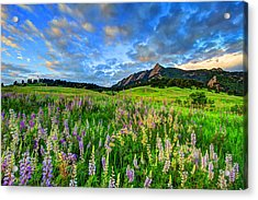 Wildflower Wonder Acrylic Print by Scott Mahon