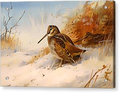Winter Woodcock Acrylic Print by Mountain Dreams