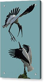 Wood Stork Pair Acrylic Print by Larry Linton