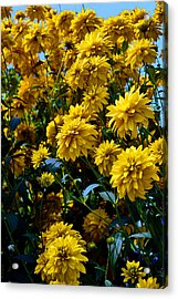 Yellow Flowers. Acrylic Print by Andy Za