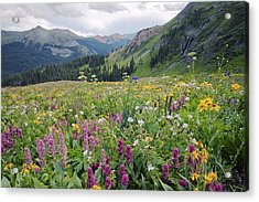 Wildflower Meadow Acrylic Print by Bob Gibbons