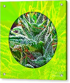 Cannabis 420 Collection Acrylic Print by Marvin Blaine