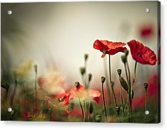 Poppy Meadow Acrylic Print by Nailia Schwarz