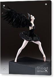 Black Swan  Acrylic Print by Vickie Arentz