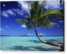 Bora Bora, Palm Tree Acrylic Print by Ron Dahlquist - Printscapes