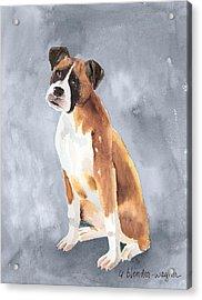 Buddy Acrylic Print by Arline Wagner
