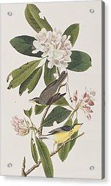 Canada Warbler Acrylic Print by John James Audubon