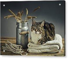 Cat Portrait Acrylic Print by Nailia Schwarz