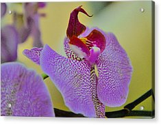 Closeup Of A Phalaenopsis Blossom. Acrylic Print by Andy Za