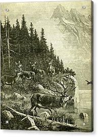 Deer Acrylic Print by Austrian School