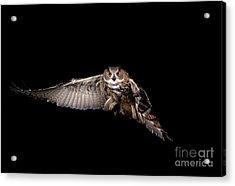 European Eagle Owl Bubo Bubo Acrylic Print by Gerard Lacz