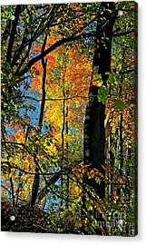 Fall Fire Works Acrylic Print by Robert Pearson