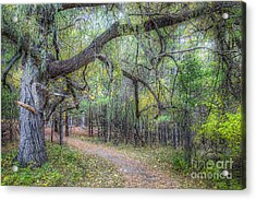 Forest In Sleeping Bear Dunes Acrylic Print by Twenty Two North Photography