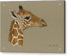 Giraffe Head Study  Acrylic Print by Juan  Bosco