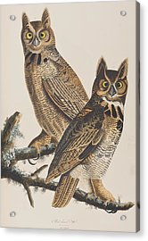 Great Horned Owl Acrylic Print by John James Audubon