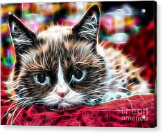 Grumpy Cat Acrylic Print by Marvin Blaine