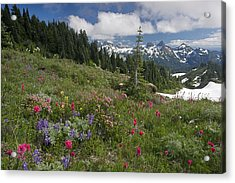 Mountain Meadow Acrylic Print by Bob Gibbons