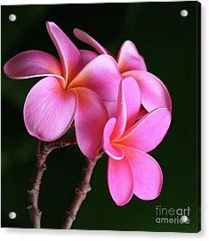 Na Lei Pua Melia Aloha He Ala Nei E Puia Mai Nei Pink Plumeria Acrylic Print by Sharon Mau