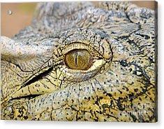 Nile Crocodile Acrylic Print by George Atsametakis