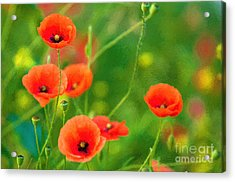 Poppies Acrylic Print by Andrew Michael