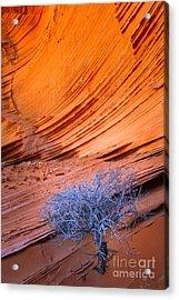 Rainbow Rocks Dead Bush #1 Acrylic Print by Inge Johnsson